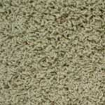 Irresistible Stainmaster Carpet